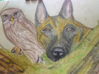 dog with owl drawing 2016